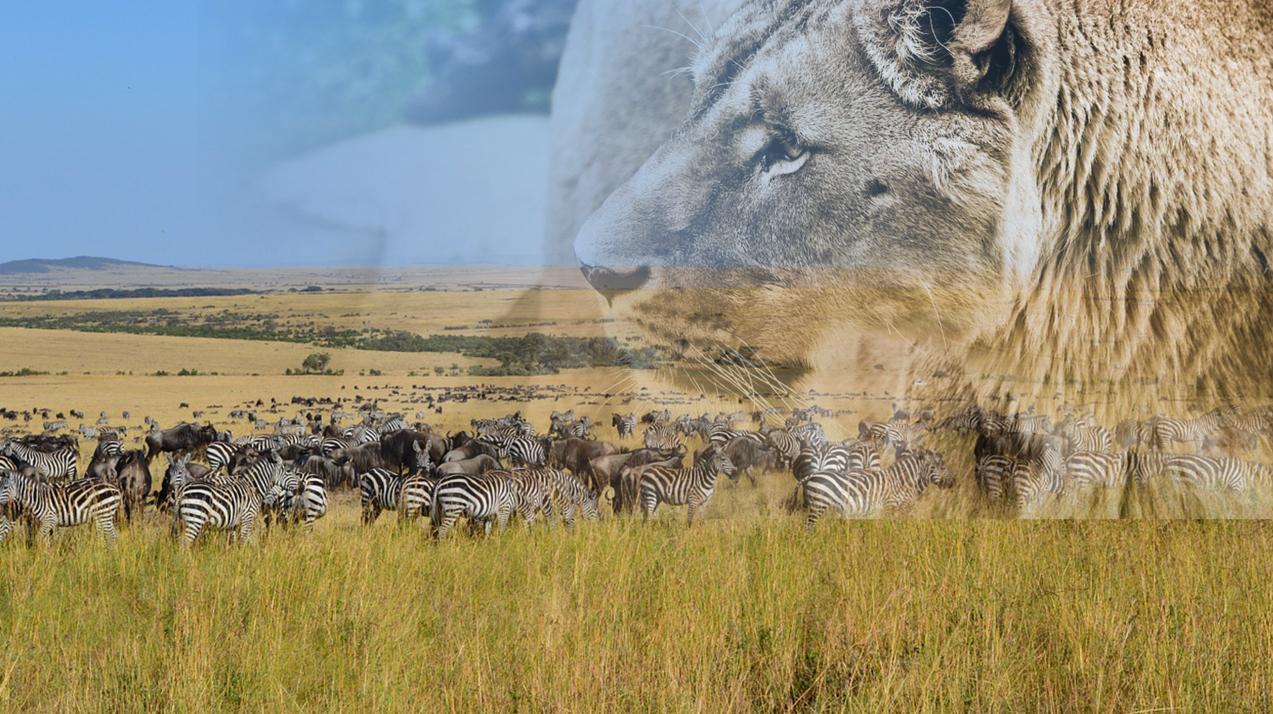 ライオンが徐々に透明になった画像