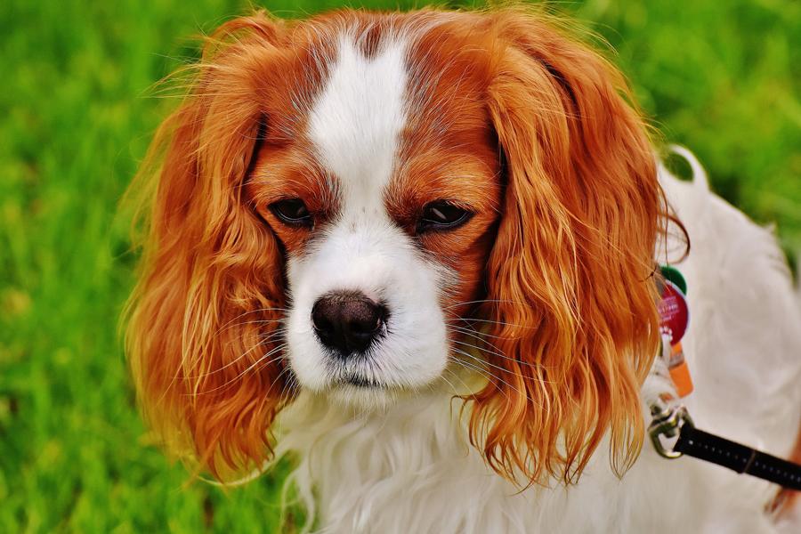 元の寂しそうな表情の犬の画像