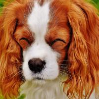 パペットワープで犬を笑顔にしてみる