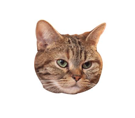 猫の顔を切り取った画像