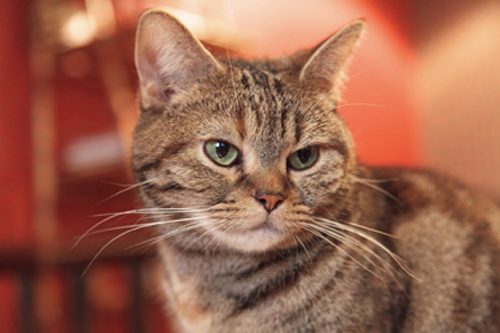 Image of a cat