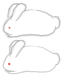 Illustration of a rabbit using Watercolor brush