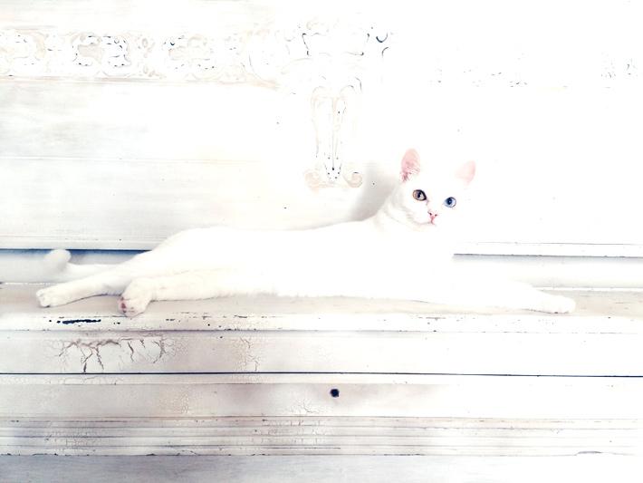 明るく写った白い猫