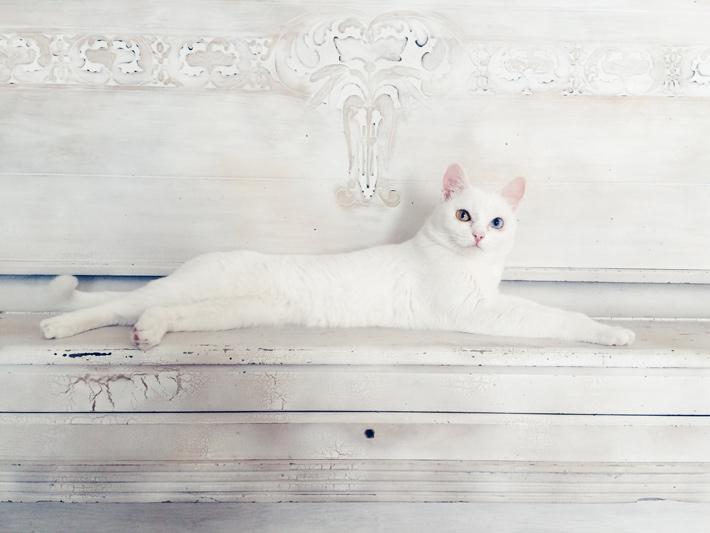 ちょうど良い明るさに写った白い猫