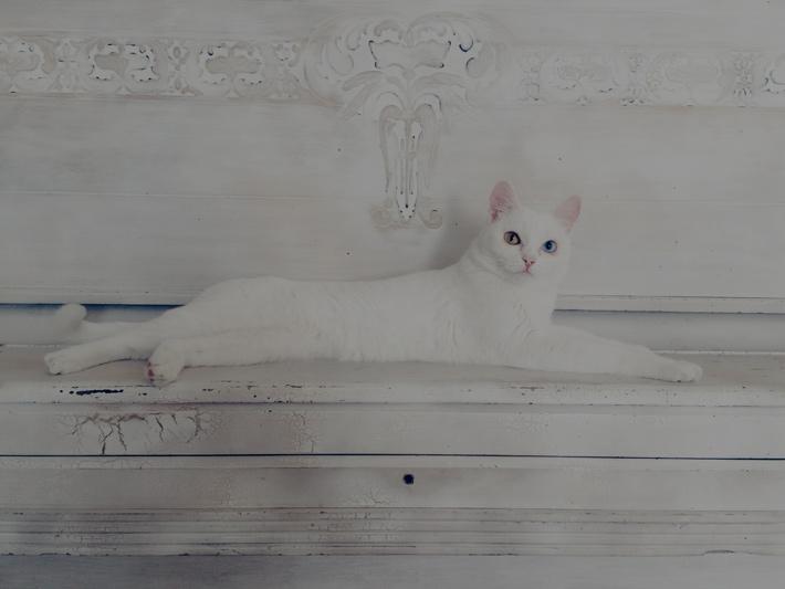 暗く写った白い猫